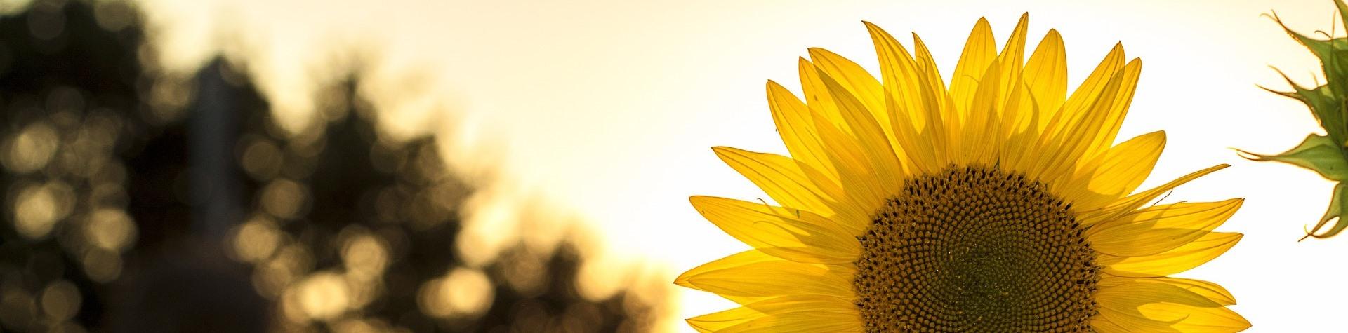 Summer Student Nefisa Marium shines a light on vitamin D