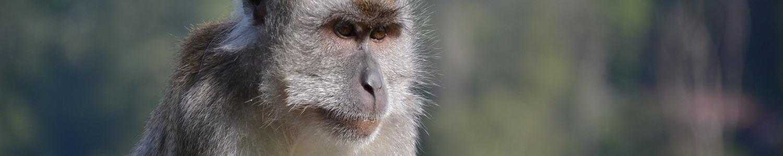 monkey cloning testing clone