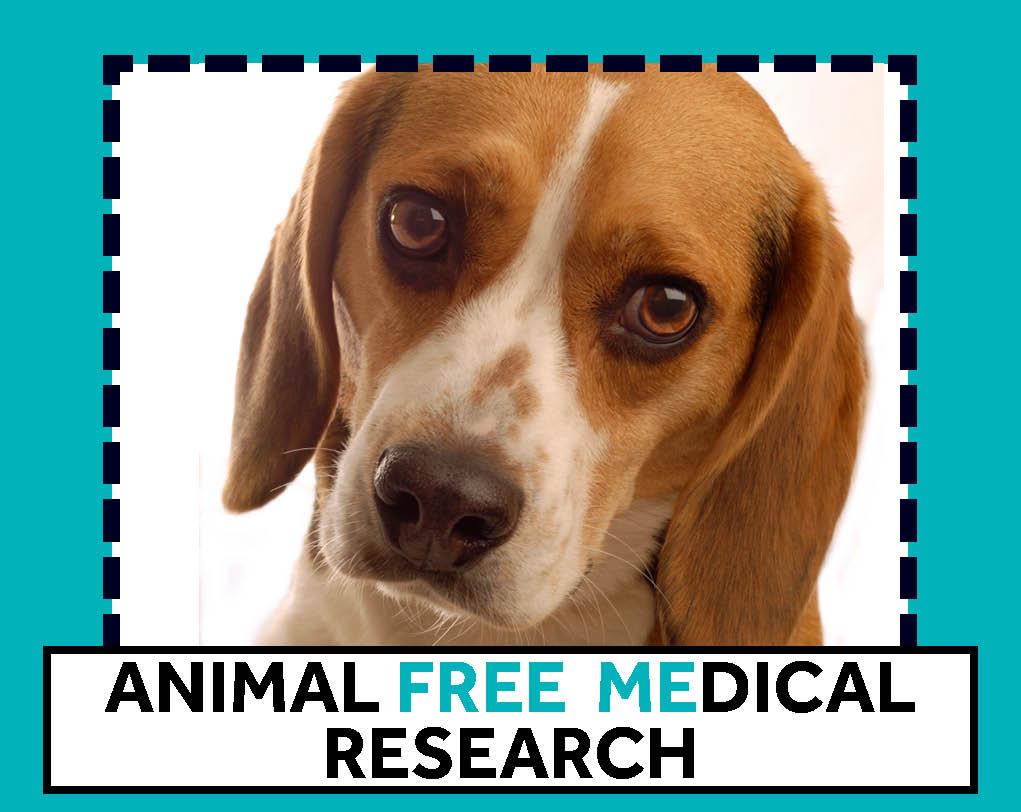Beagle - free me