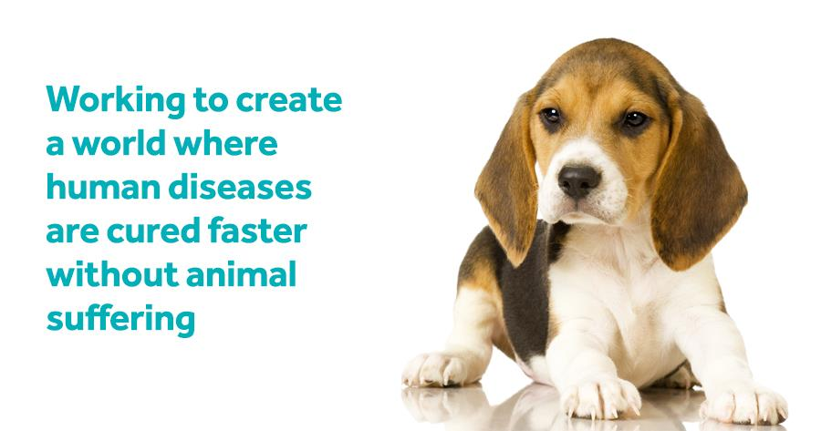 Working to create a world where human diseases are cured faster without animal suffering